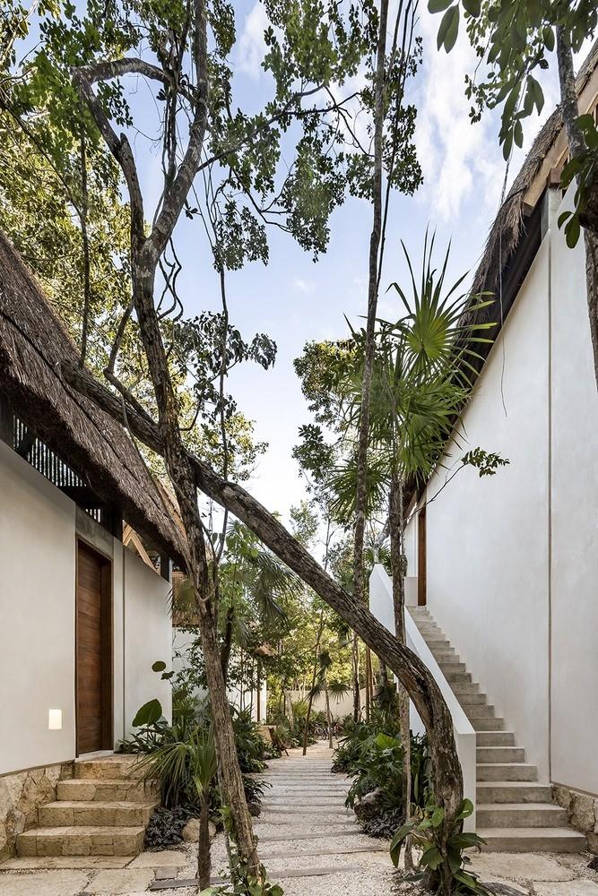 Jungle Keva - Modern Architect Magazine