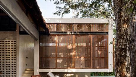 Modern Architect - Jungle Keva